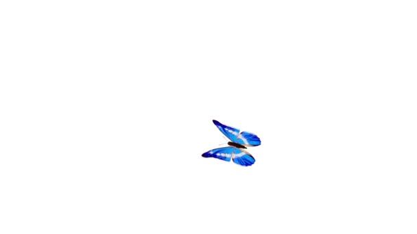 Flight butterfly