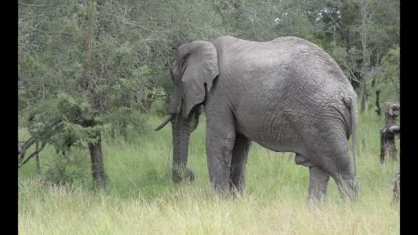Elephant in wild park