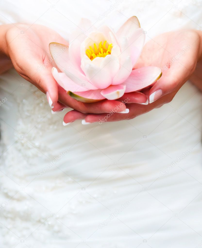 water lily in flower in hands
