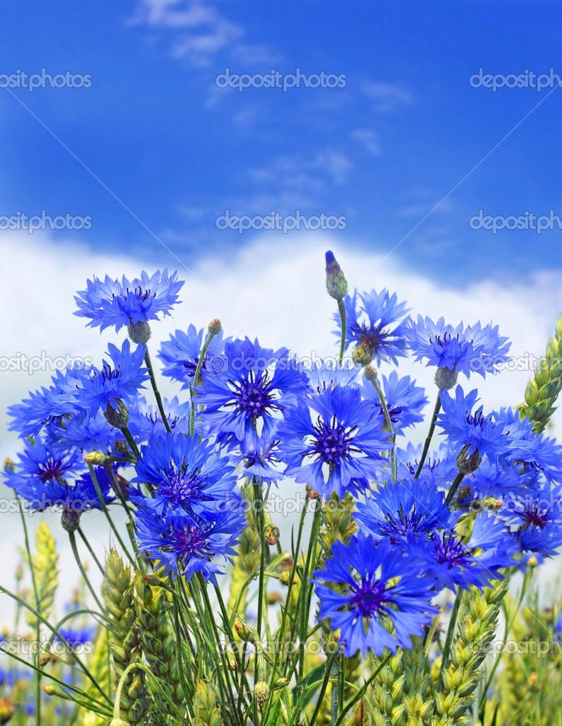depositphotos_37462001-stock-photo-blue-