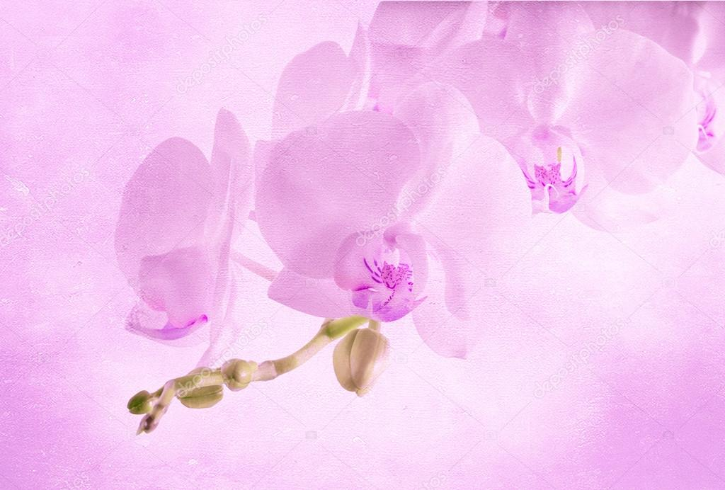 vintage background with orchid flower
