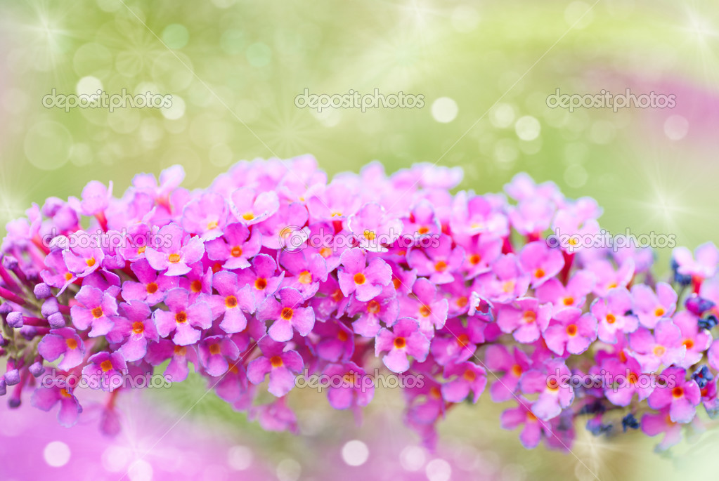 bright purple flowers, autumn flower design.with copyspace, Beautiful flower