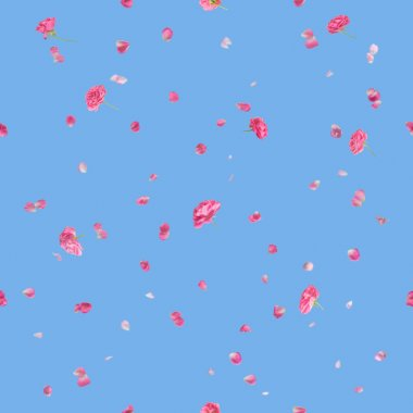Seamless background of studio photographed, flying roses and petals with depth of field in pink, where the brighter petals are soft, with a back light, isolated on blue stock vector