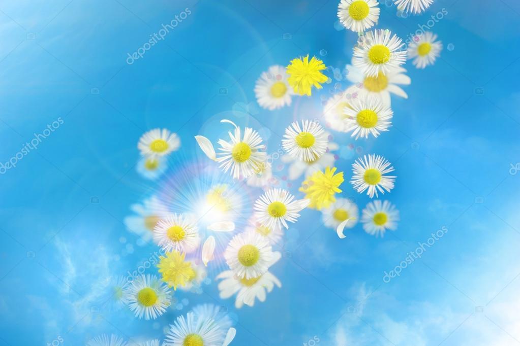Daisy bokeh glitter breeze