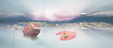 Frogspawn under Waterlily Leaf