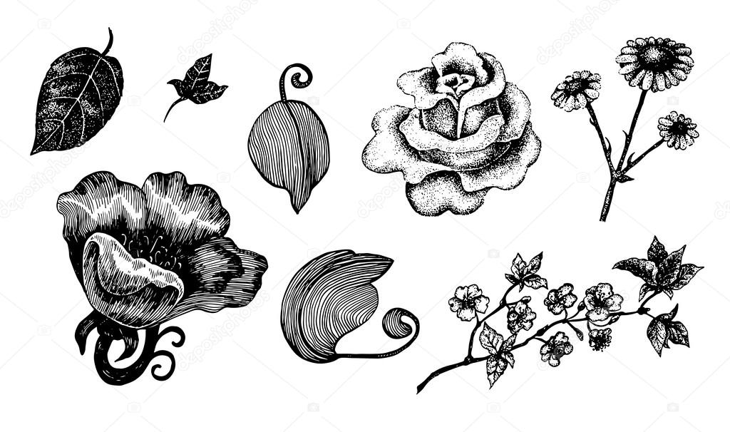 Collection of hand drawn ink flowers and leaves