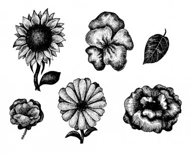 Collection of black and white hand drawn flowers