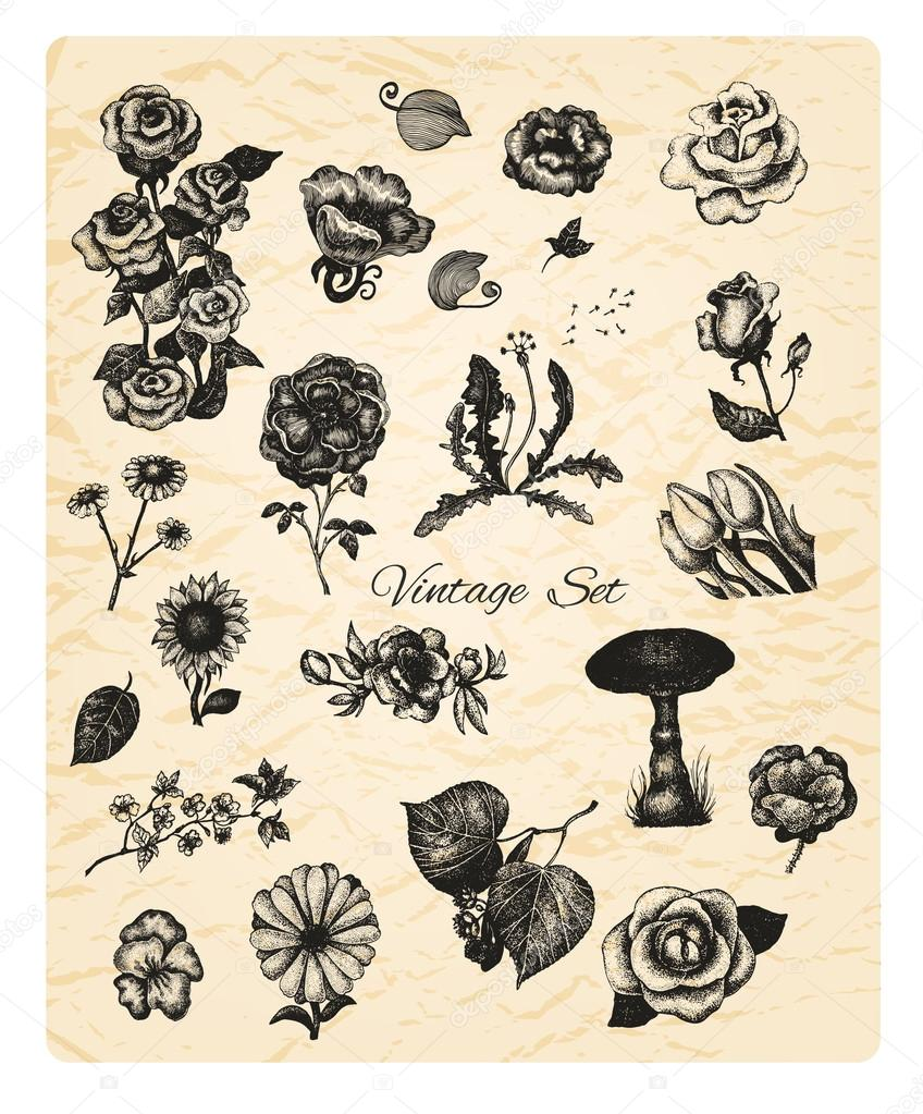 Big set of vintage hand drawn vector flowers on textured backgro