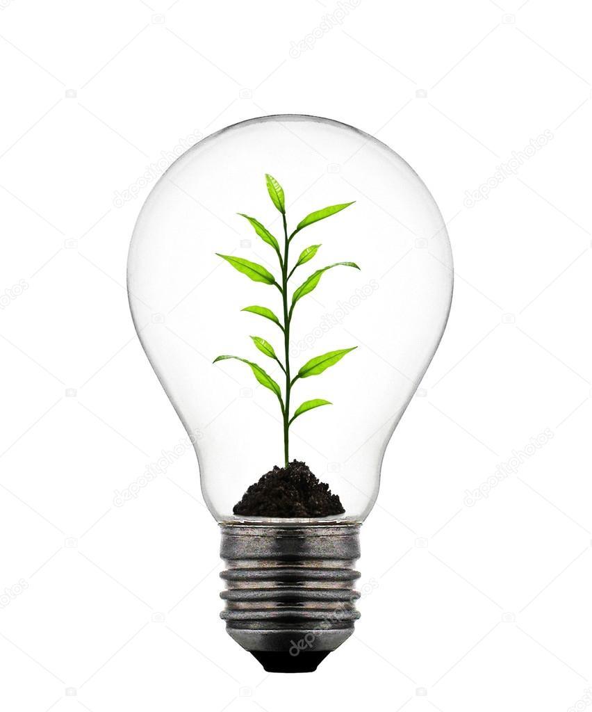 pflanze w chst die gl hbirne stockfoto ozaiachinn 21197743. Black Bedroom Furniture Sets. Home Design Ideas