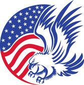 Fotografie American bald eagle