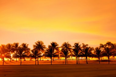 Colorful sunset or sunrise with silhouettes of palm trees