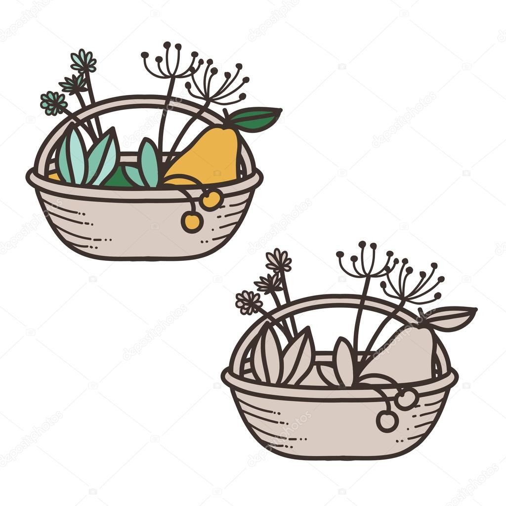 Vector basket with fruits and plant