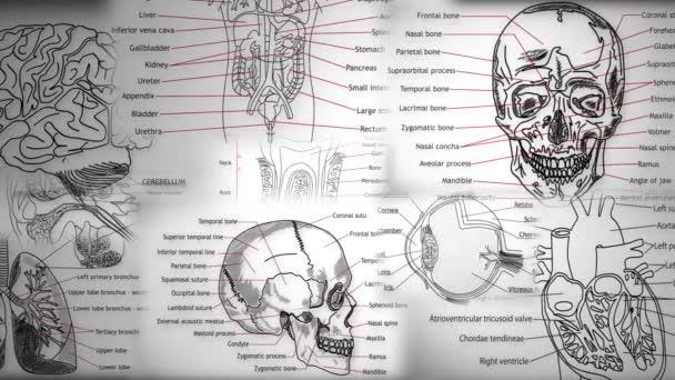 Human Body Parts animation illustration