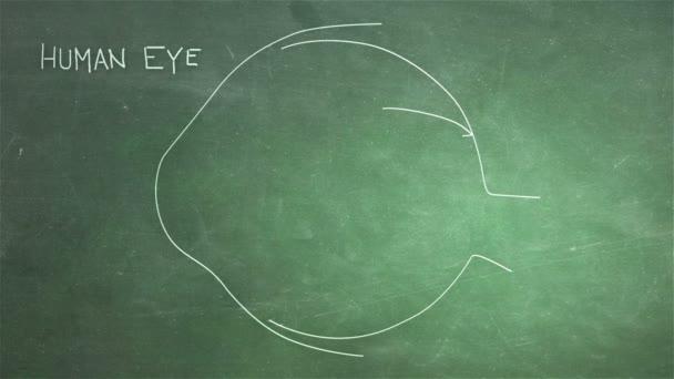 Human Eye Animation