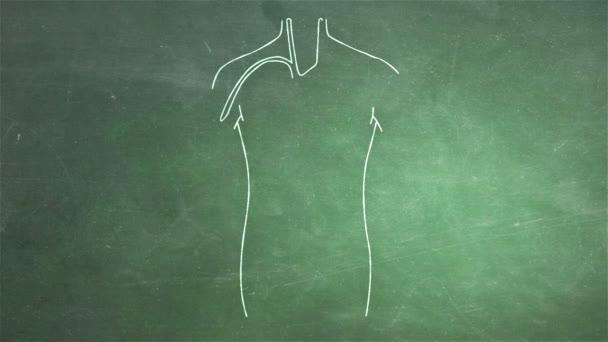 animace lidské orgány