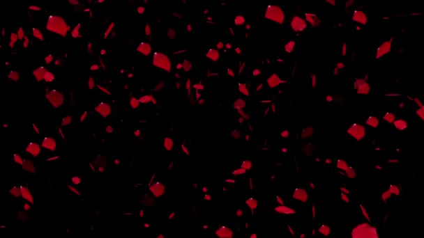Rose petals falling, animation.