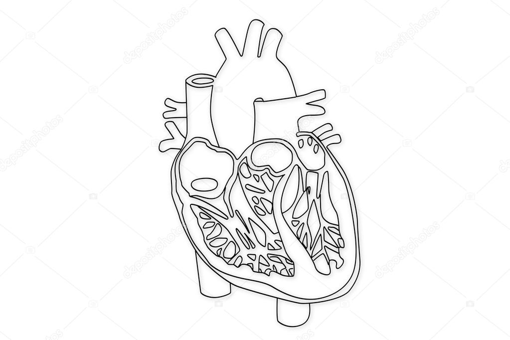 Human heart structure stock photo boscorelli 15855189 human heart structure photo by boscorelli ccuart Image collections