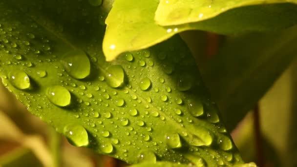 kapky vody na list maker 01