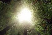 vzhlédl od hlubokých lesích 3d vykreslení