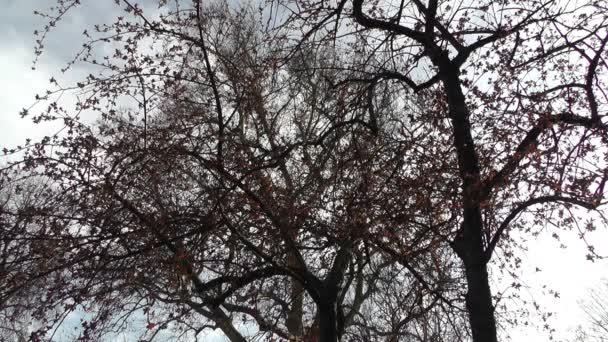 v japonské zahradě květy jarní strom