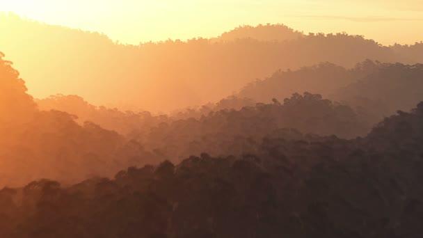 giungla al tramonto, alba aerea 3d rendering