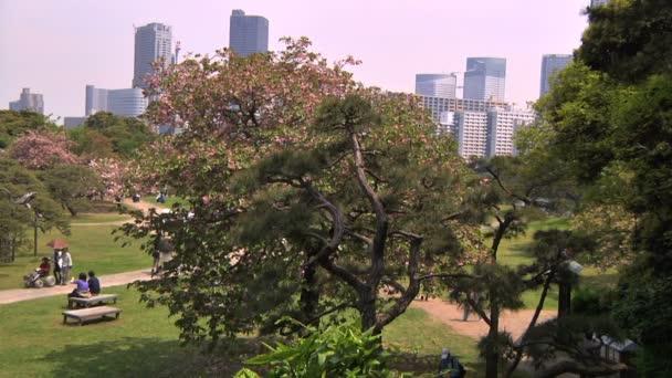třešňový květ strom v japonské zahradě v Tokiu
