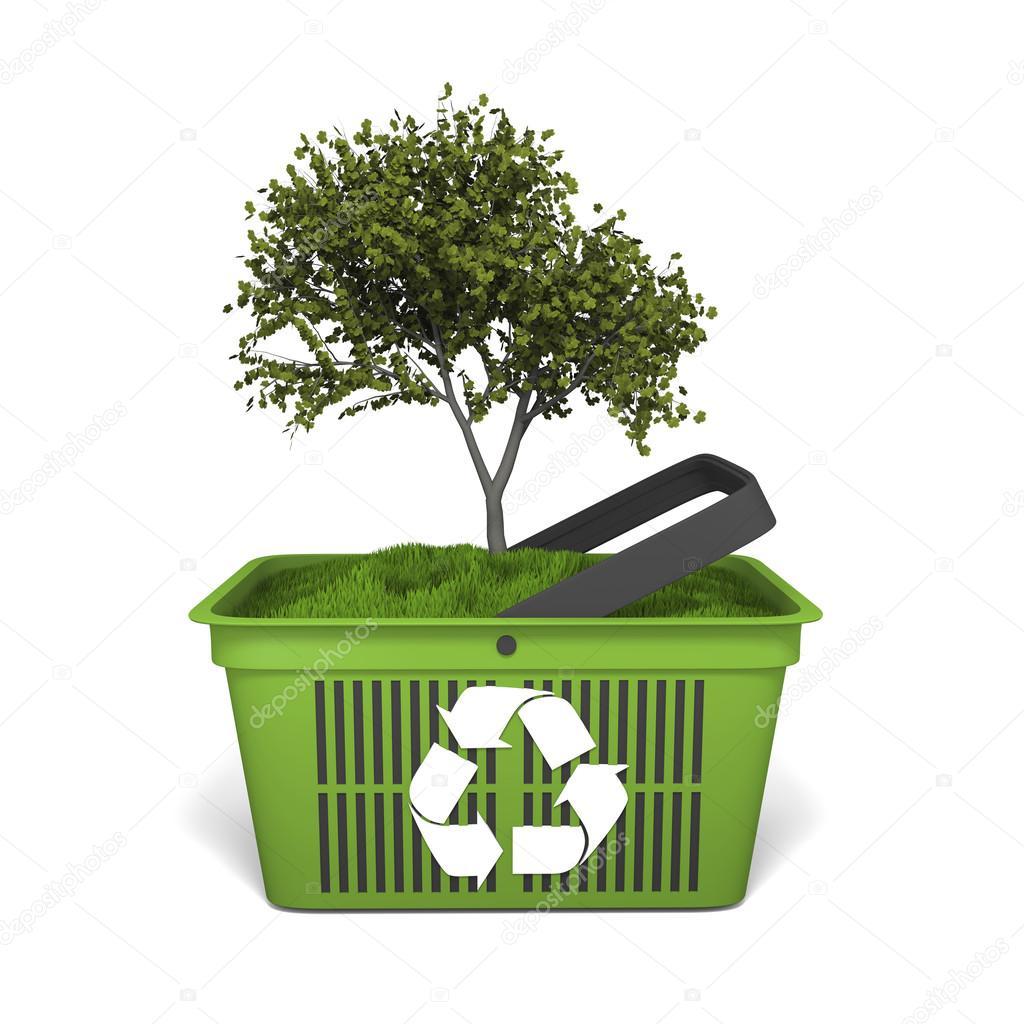 Tree in green basket