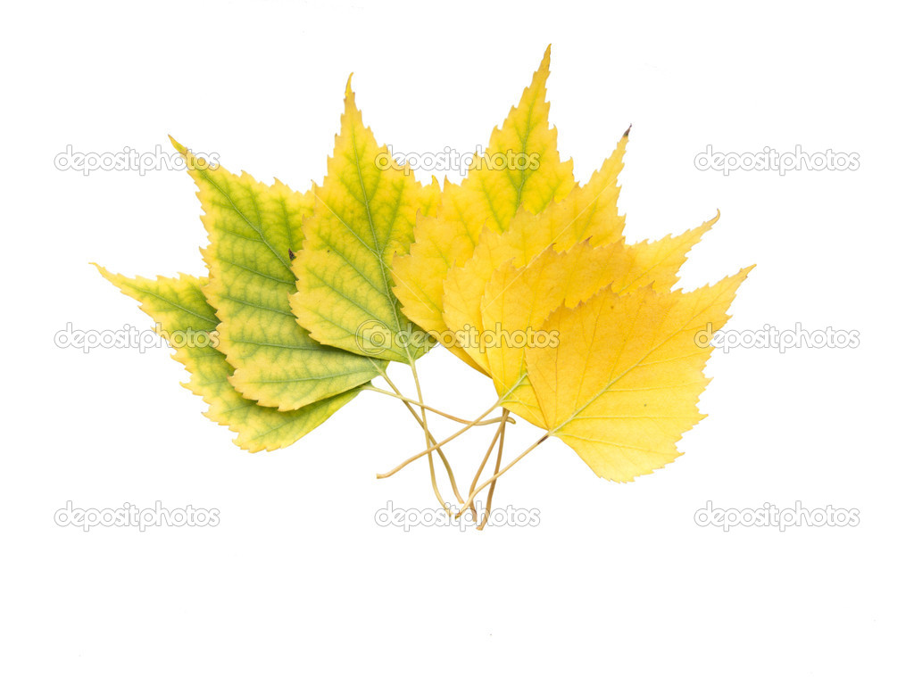 Yellow Leaves In Different Shades Stock Photo C Dudakov 14155096