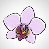 Fényképek kézzel rajzolt orchidea - phalaenopsis