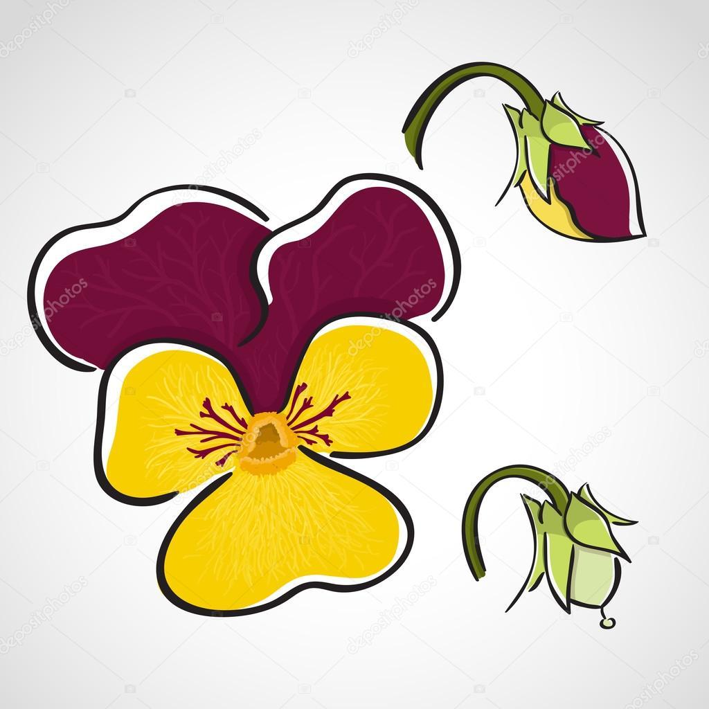 Sketch style flower set - pansy