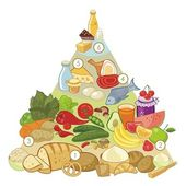 Všežravec potravinová pyramida