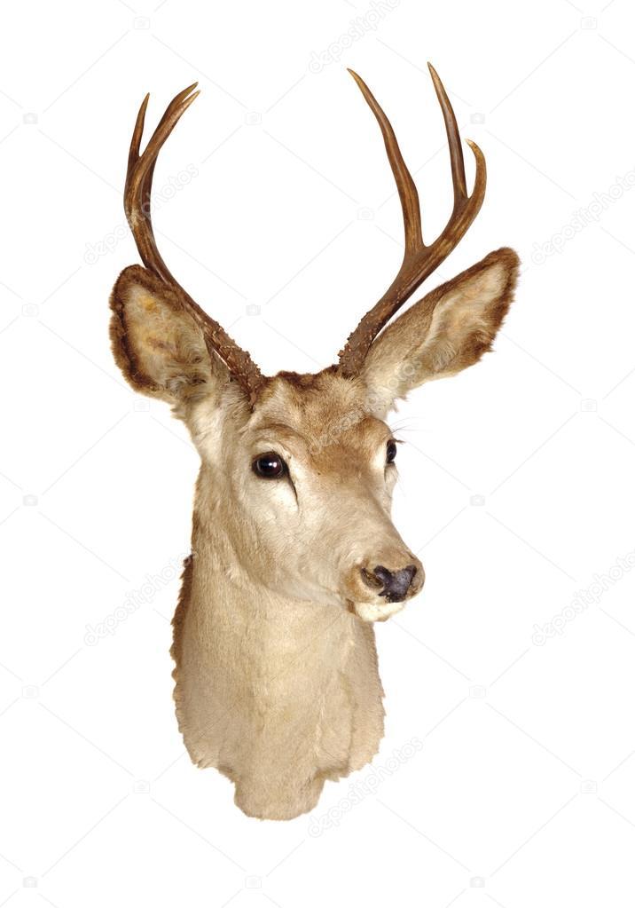 Monte cabeza de venado foto de stock jeffbanke 40111013 for Cabeza de ciervo