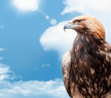 eagle on background sky