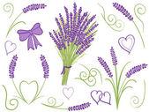 Illustration of lavender design elements