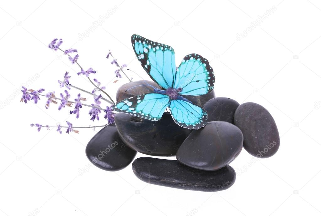 Blue butterfly on stones and lavender flower isolated on white