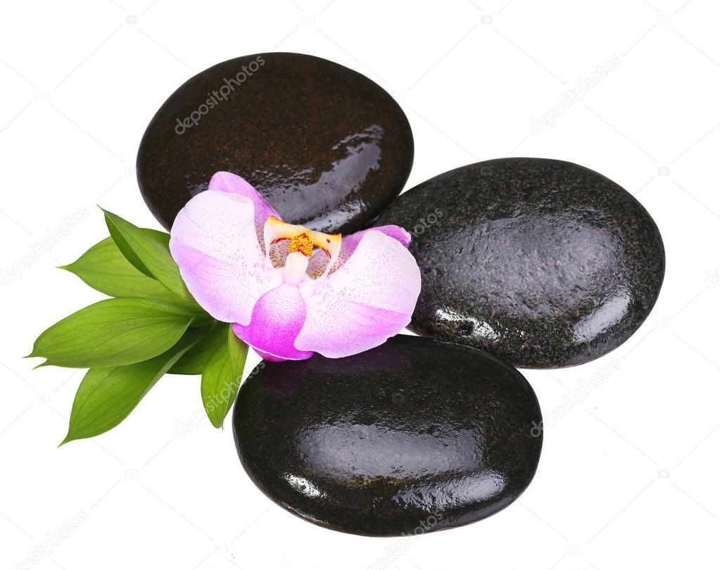 cailloux zen pierres de spa et de la fleur d 39 orchid e aux feuilles vertes photographie guzel. Black Bedroom Furniture Sets. Home Design Ideas