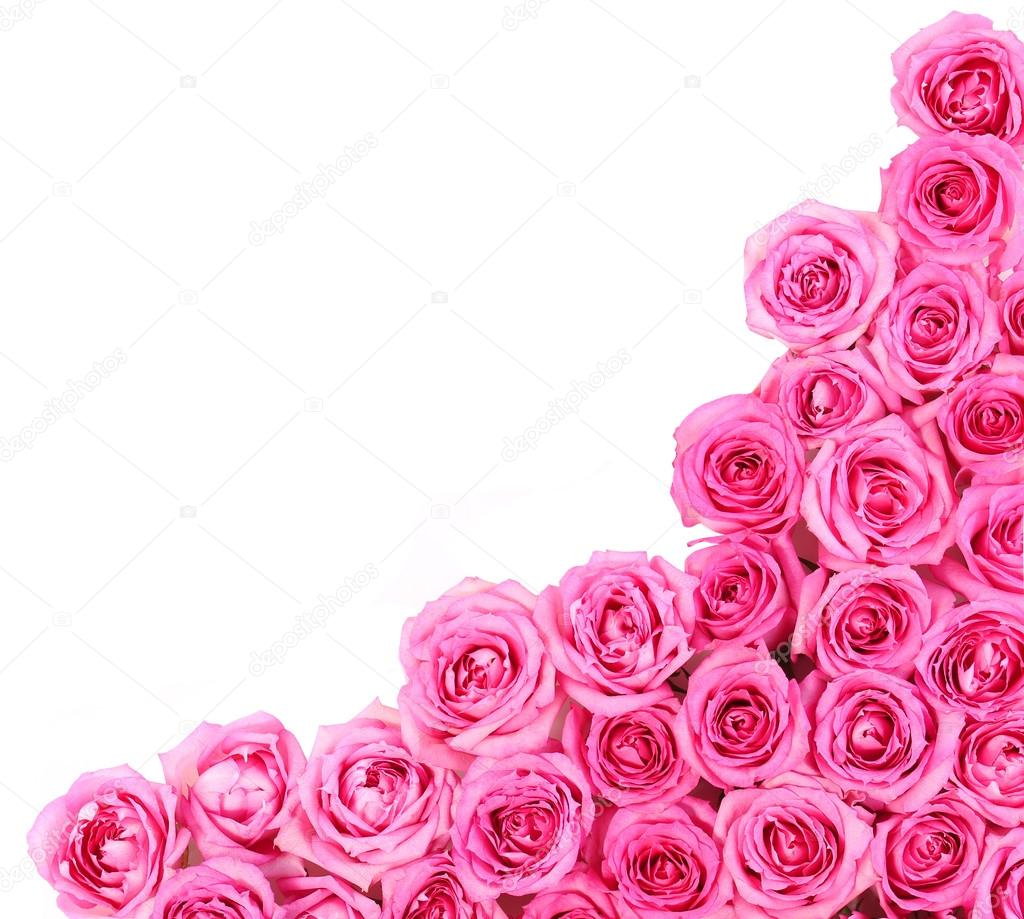 Hot pink roses over white background border stock photo guzel hot pink roses over white background border stock photo mightylinksfo