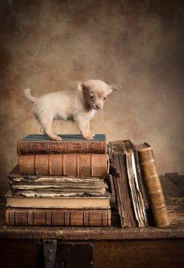 Puppy dog on vintage books