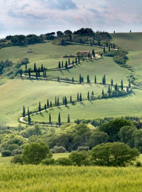 Curving road in Tuscany