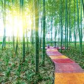 bambusové lesy Čína