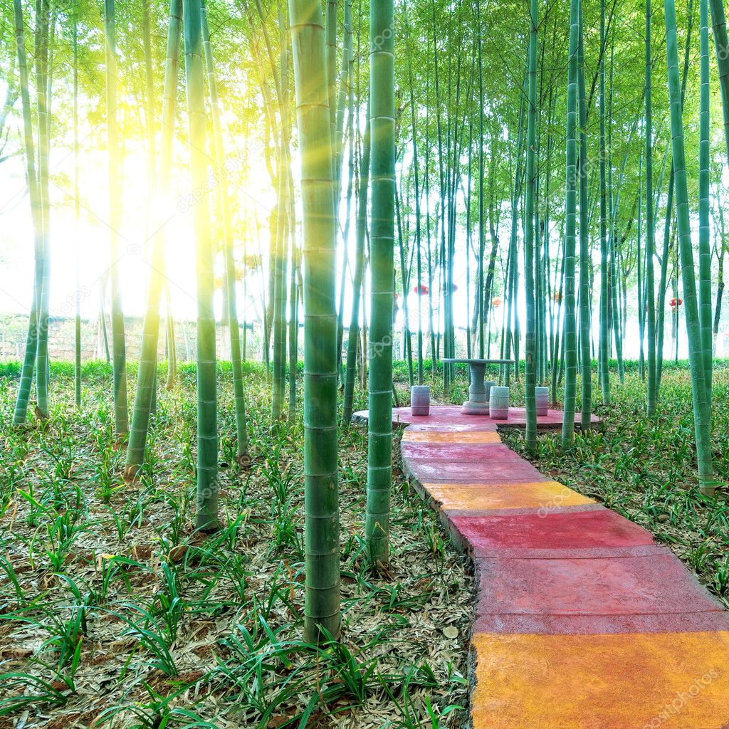 BAMBOO FOREST by China