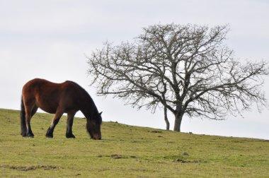 "Картина, постер, плакат, фотообои ""лошадь gorbea лугу, Страна Басков (Испания)"", артикул 22337837"