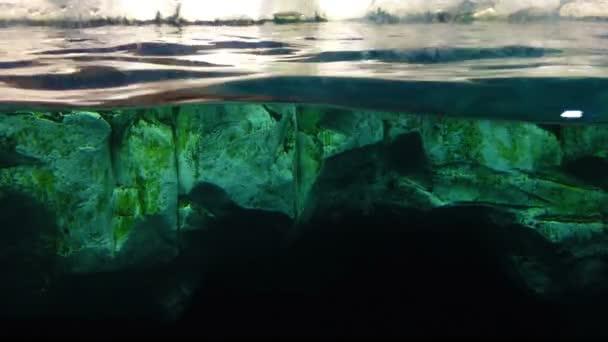 vlna detail v akvarijní vodě