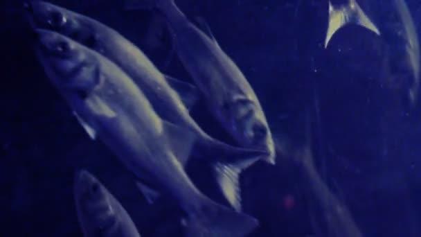 video z ryb skupiny.