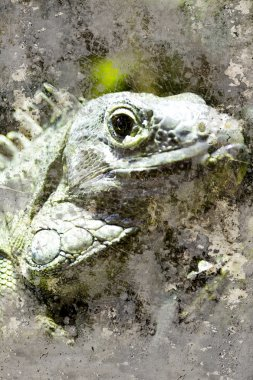 Artistic portrait of a iguana with textured background