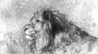 Lion tattoo illustration art, handmade drawing