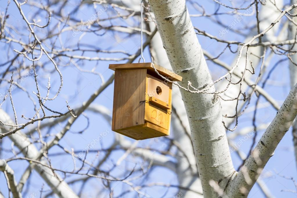 Bird house on the tree