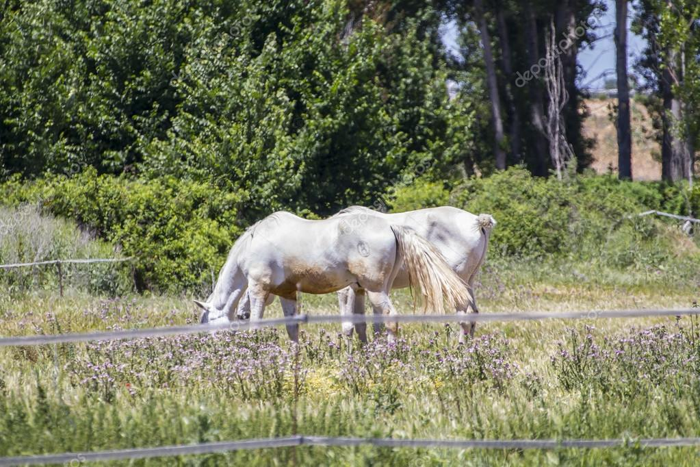 Group of horses grazing in a green pasture