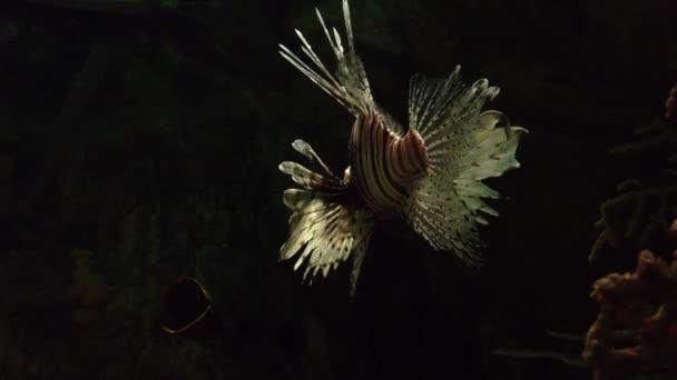 Beautiful tiger fish
