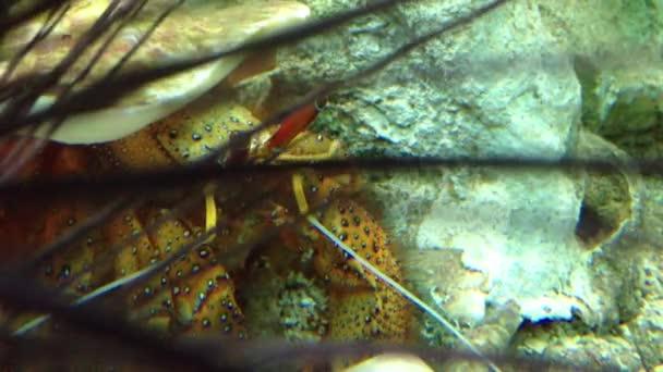 Krab pod vodou